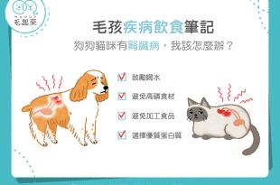 【汪喵疾病飲食】狗狗貓咪有腎臟病,我該怎麼辦?
