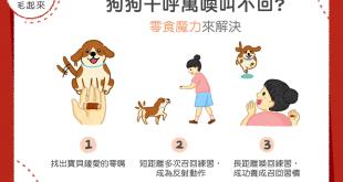 【汪汪訓練術】狗狗千呼萬喚叫不回?零食魔力來解決