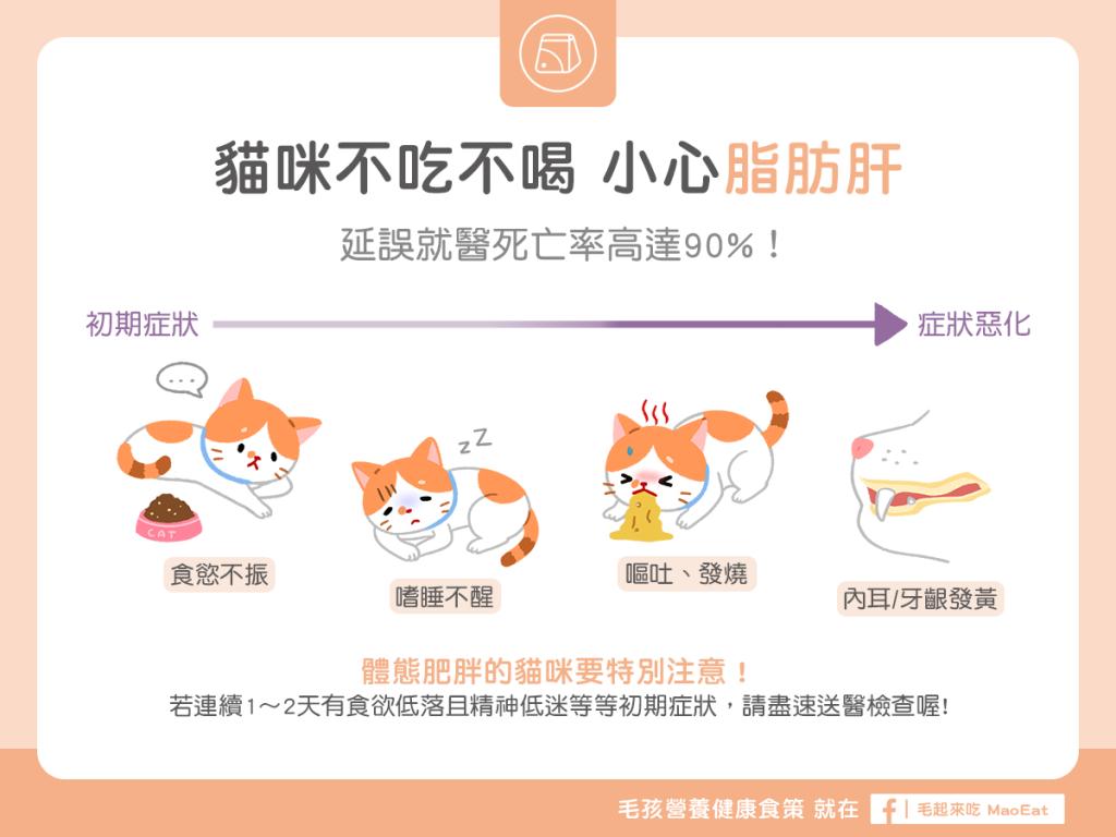 貓咪不吃不喝 小心脂肪肝