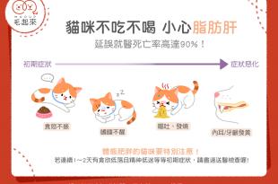 【汪喵疾病飲食】貓咪不吃不喝,小心脂肪肝!