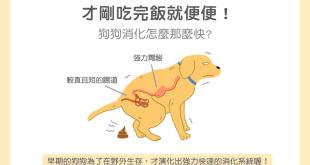 【汪喵餵養知識】剛吃完飯就便便!狗狗消化怎麼這麼快?