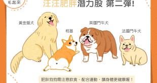 【肥胖汪喵飲食】肥胖潛力股 第二彈!