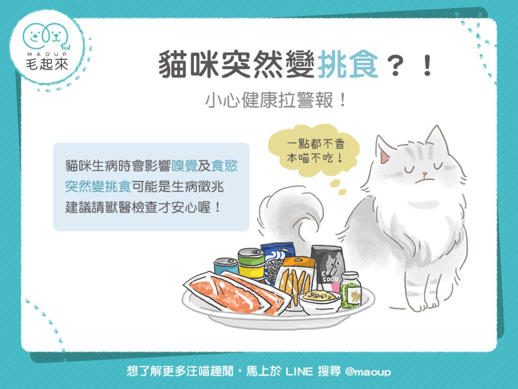 【汪喵餵養知識】貓咪突然變挑食?小心健康拉警報!