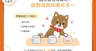 【汪汪小遊戲】和狗狗來場食物尋寶吧!益智遊戲好處多多~