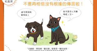 【迷思大破解】白腳底帶衰?黑狗不吉利?這都是沒根據的傳言!