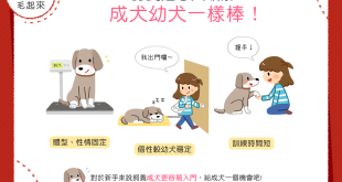 【我要領養汪】從小開始養比較親?成犬幼犬一樣棒!
