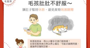 犬貓嘔吐後的腸胃照顧方法