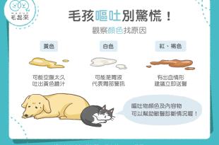從貓狗的嘔吐顏色判斷嘔吐原因