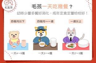 【汪喵餵養知識】毛孩一天吃幾餐?少量多餐好消化!