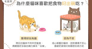 【汪喵餵養知識】為什麼貓咪喜歡把食物叼出碗吃?