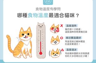 【汪喵餵養知識】過熱過冷都NG!哪種食物溫度最適合貓咪?