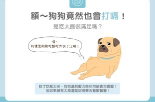 【汪喵餵養知識】額~狗狗竟然也會打嗝!是吃太飽很滿足嗎?