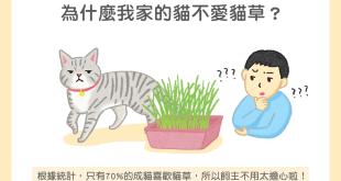 【汪喵餵養知識】為什麼我家的貓不愛貓草?