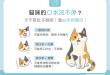 【汪喵餵養知識】貓咪的口水流不停?當心疾病警訊!