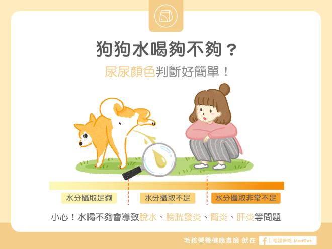 【汪喵疾病飲食】狗狗水喝量夠不夠?看尿尿顏色就知道!