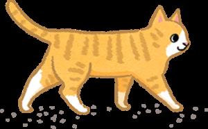 【汪喵餵養知識】貓咪用手喝水好可愛?細菌都被吃到肚子裡啦!