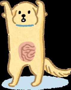 【汪喵餵養知識】人狗貓腸道長度大PK!腸道越長吸收率越好!