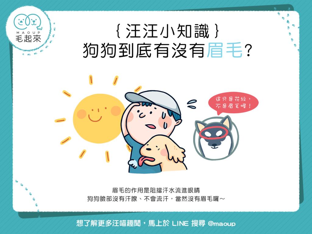 【汪汪小學堂】ㄟ~狗狗到底有沒有眉毛?