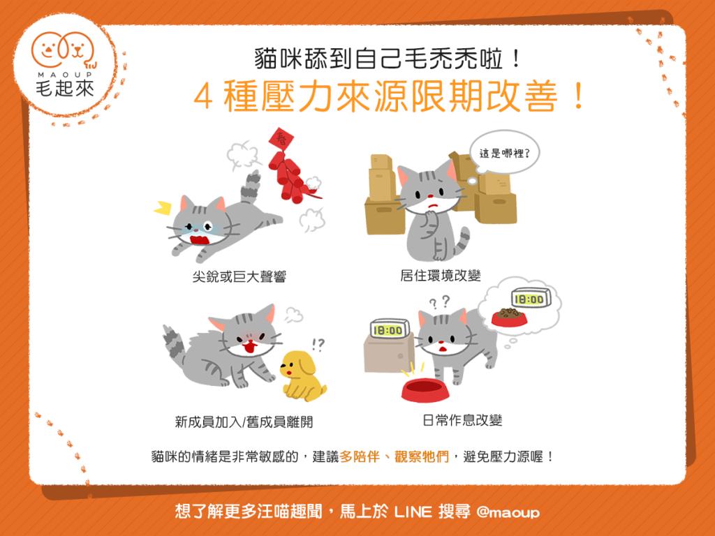 【喵喵康健】驚!貓咪舔到自己毛禿禿!?當心這4種壓力來源!