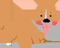 中型犬每日運動量
