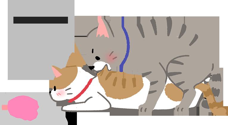 【喵喵小學堂】特殊情趣?!為什麼貓貓交配要咬脖子?