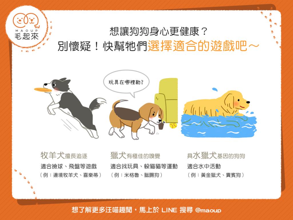 【汪汪康健】想讓狗狗身心更健康?快幫牠們選擇適合的遊戲吧!