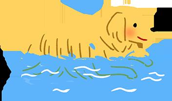 具水獵犬基因的狗狗