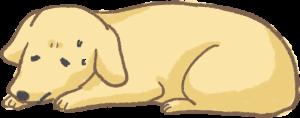 【高齡汪喵飲食】狗狗年紀大最常出現五大問題!