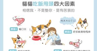 【汪喵餵養知識】不是整你~貓貓吃飯甩頭四大因素