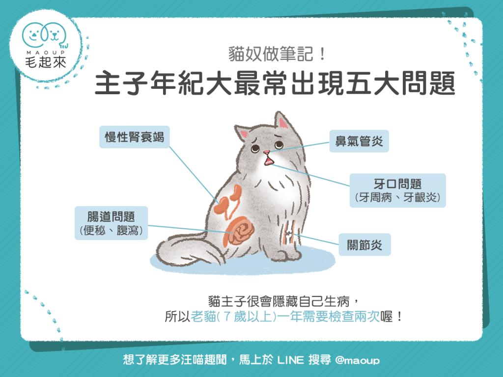 【高齡汪喵飲食】貓奴快筆記!老貓年紀大最常出現五大問題!