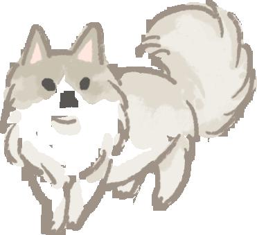 布偶貓壽命