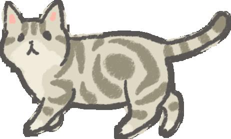 美國短毛貓壽命