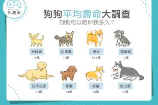 【汪汪小百科】狗狗平均壽命大調查 可以陪伴我多久?