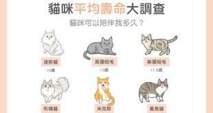 貓咪平均壽命大調查 貓咪可以陪伴我多久?