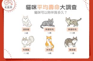 【喵喵小百科】貓咪平均壽命大調查  貓咪可以陪伴我多久?