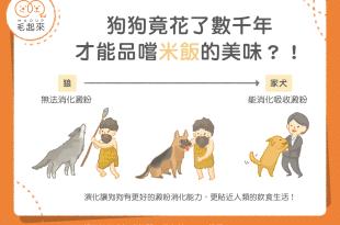 【汪喵餵養知識】狗狗竟花了數千年 才能品嘗米飯的美味?!