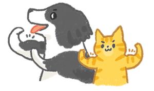 貓狗健康檢查每年一次