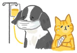 腎臟病糖尿病老貓老狗健康檢查依醫生囑咐