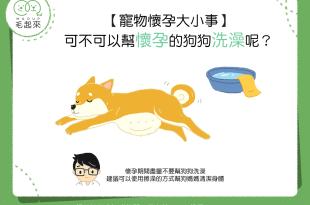 【汪喵懷孕大小事】狗狗懷孕時,是可以洗澡的嗎?