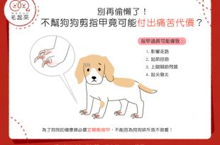 【汪汪康健】別再偷懶了!狗狗不剪指甲,將付出痛苦代價?!