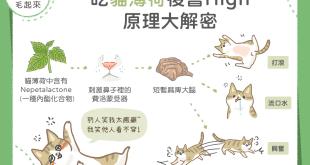 貓咪吃貓薄荷會興奮的原因