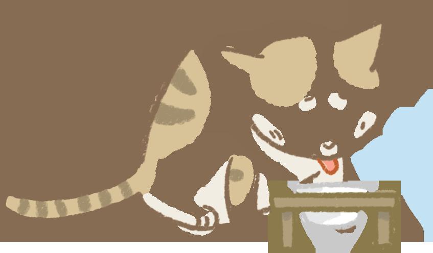 貓咪愛喝水可能造成糖尿腎臟子宮疾病