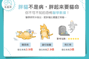 【喵喵康健】胖貓不是病,胖起來要貓命!恐怖胖貓數據