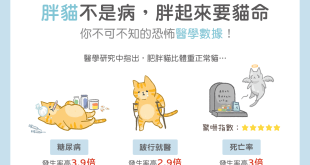 貓咪過胖容易有糖尿病,死亡率也會提高