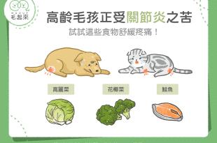 【汪喵疾病飲食】高齡毛孩受關節之苦 試試這些食物舒緩疼痛