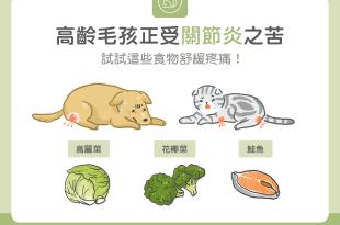 狗狗貓咪關節炎,吃這些食物能舒緩疼痛