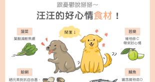 憂鬱狗狗吃什麼