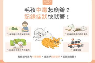 貓咪狗狗中毒怎麼辦?