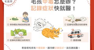 狗貓中毒怎麼辦