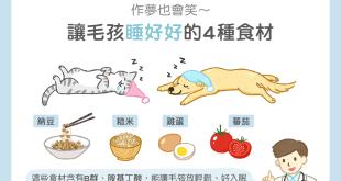 貓狗寵物難以入眠晚上不睡覺助眠好眠吃什麼食材
